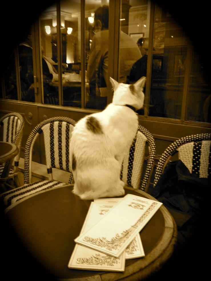 Een kat die op de tafel zat